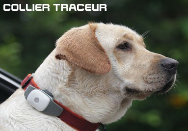 collier-traceur-chat